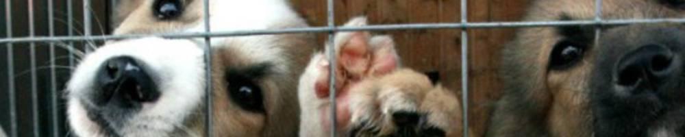 Общественная организация защиты животных «Артемон»