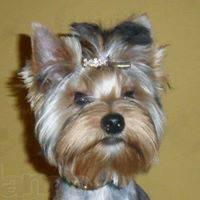 Bonya Ryzhzhy's avatar'