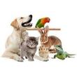 Больница домашних животных