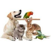 Лікарня домашніх тварин — Ветеринар