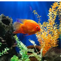 Мир аквариума — Зоомагазины