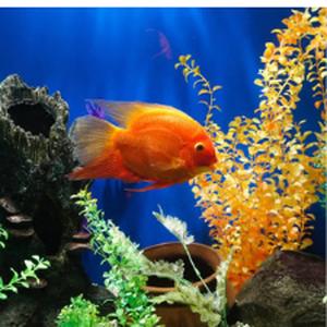Світ акваріума page