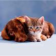 Зоомагазин Кіт і Пес