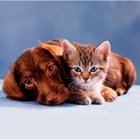 Зоомагазин Кіт і Пес — Зоомагазини