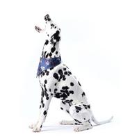 Ветеринарна клініка АльянВЕТ — Ветеринар