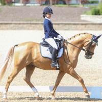 Кінний клуб Imperial Horse Club у Білій Церкві — Спортивні секції