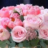 Квіти — Магазини квітів