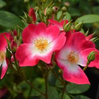 БроваСад — Сад і город
