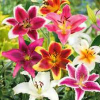 Інтерфлора — Сад і город