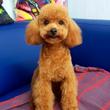 Готель для тварин Barberdog