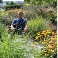 Сонцецвіт — садовий центр — Сад і город