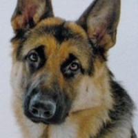 Ветеринарна клініка Мухтар — Ветеринар