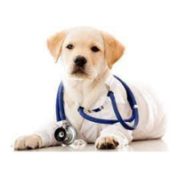 Переяслав-Хмельницька ветеринарна лікарня — Ветеринар