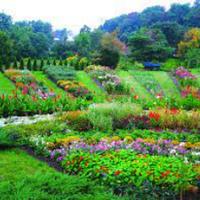 Національний Ботанічний сад у Києві — Парки