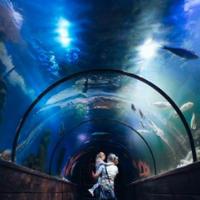 Океанаріум Морська Казка в Києві — Зоопарки і океанаріуми